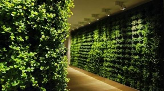 parede-verde-1