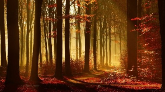 Forrest-photography-by-Nelleke-Pieters-9-600x343