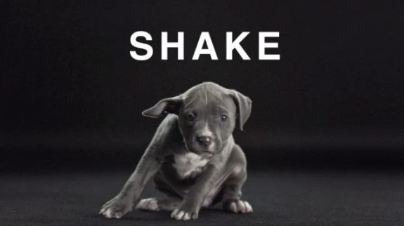 shake-with-dogs2