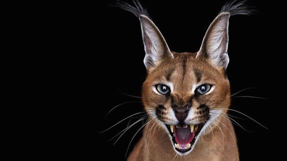 Série fotográfica de animais exoticos