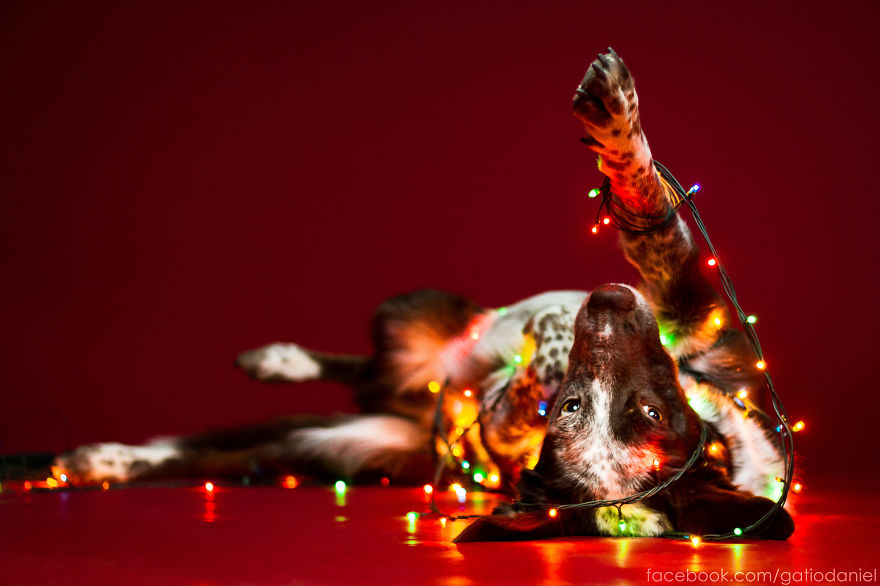 i-took-christmas-themed-dog-portraits-to-wish-you-happy-holidays-3__880