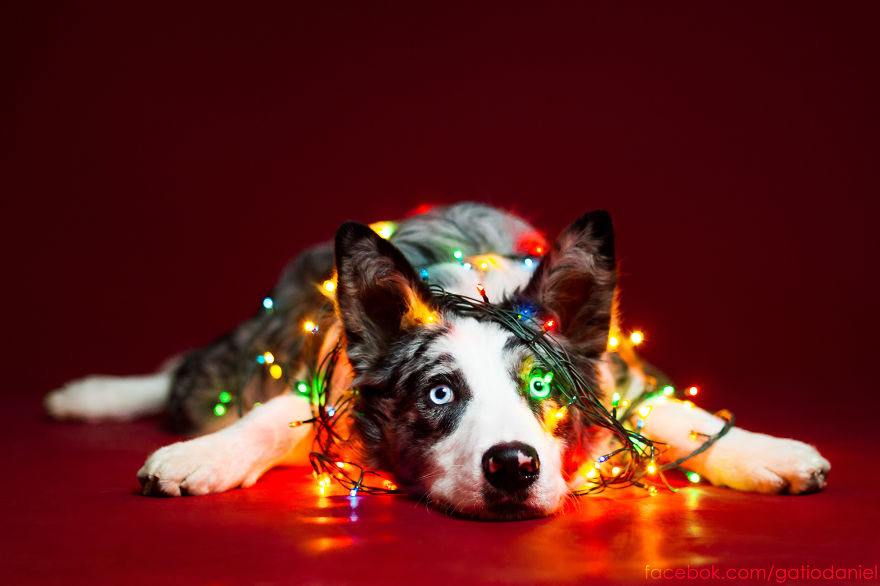 i-took-christmas-themed-dog-portraits-to-wish-you-happy-holidays__880