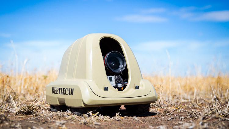 Beetle cam