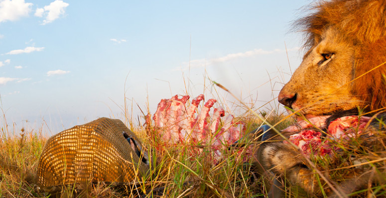 Beetle cam wildlife africa